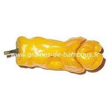 Piment Pénis jaune réf.393