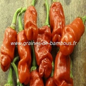 Piment Pénis orange réf.394