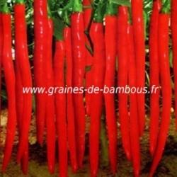 Piment Long slim de Cayenne rouge réf.649