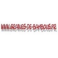 Pin conifere www graines de bambous fr