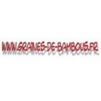Pin de l himalaya www graines de bambous fr
