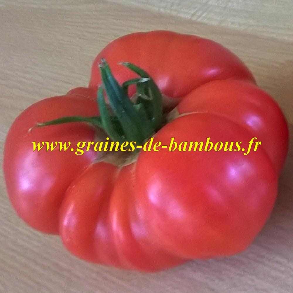 Pink brandywine tomate