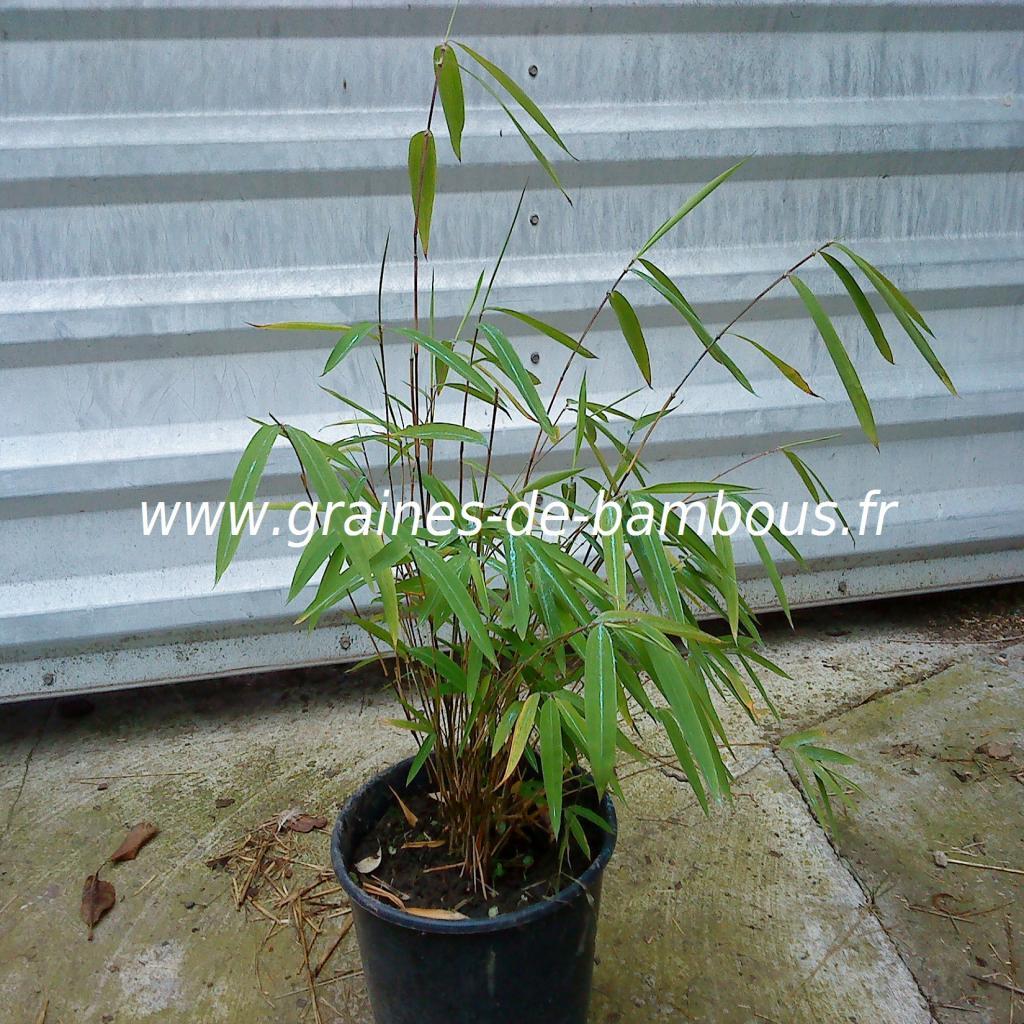 plant-de-gaolinensis-12.jpg