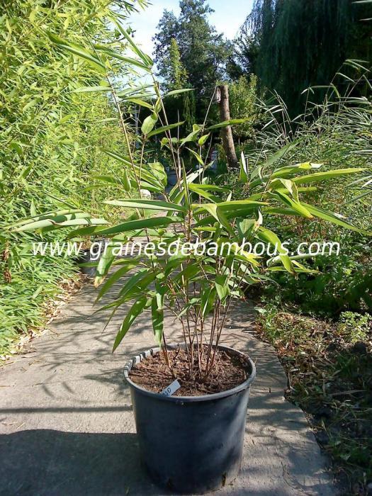 Plant moso site 2