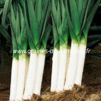 Poireau geant de bulgarie graines de bambous fr
