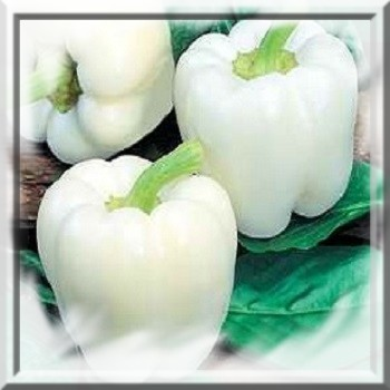poivron-blanc-capsicum-annum-www-graines-de-bambous-fr-www-grainesdebambous-com.jpg