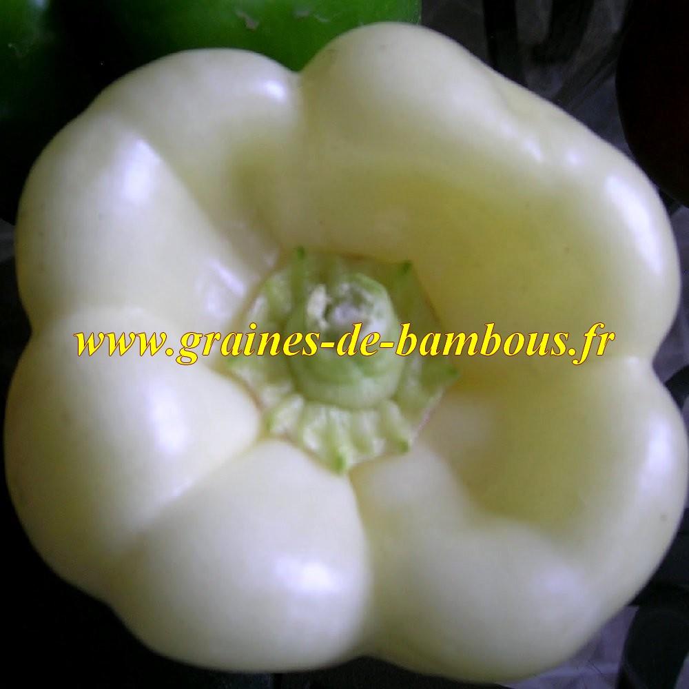 Poivron blanc semences