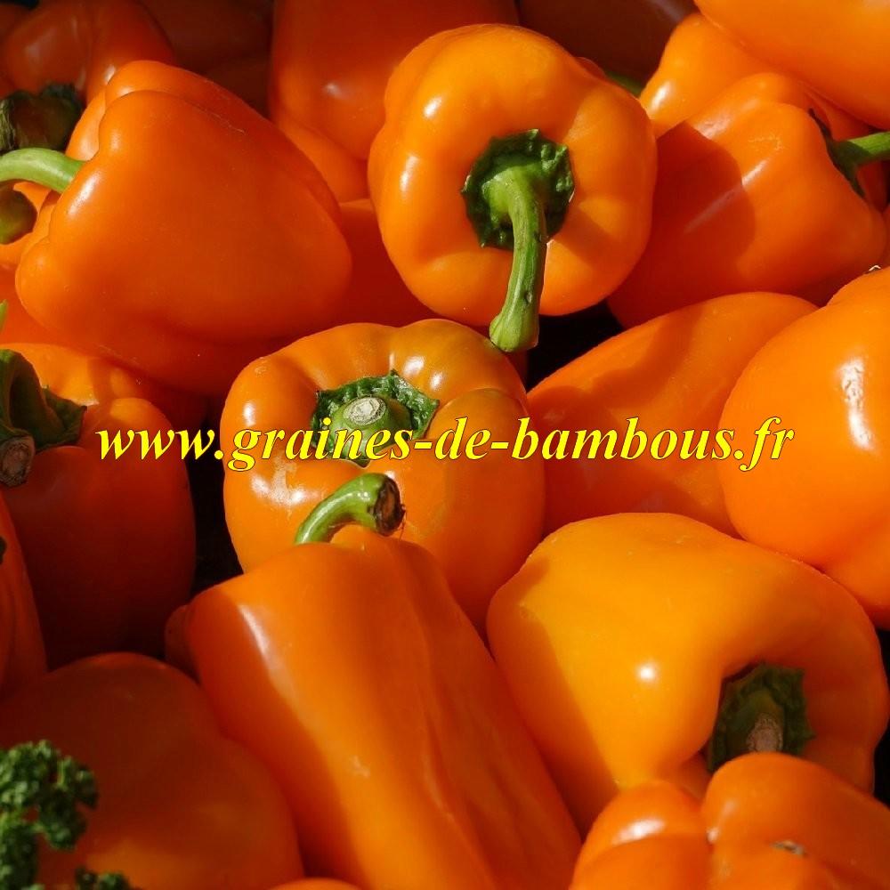 Poivron orange etiuda