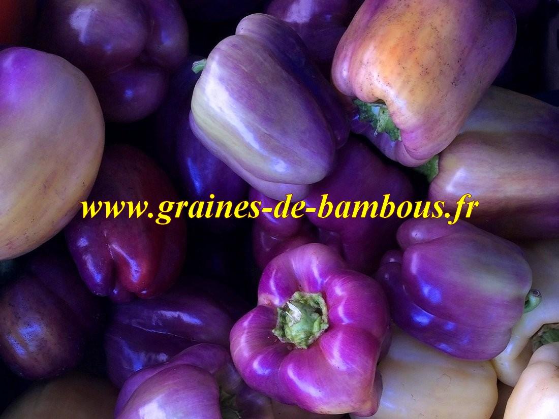 Poivron violet