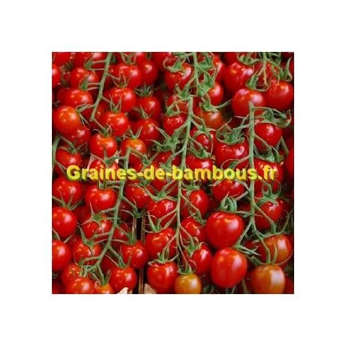 Pokusa graines de tomate
