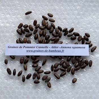 Pommier cannelle attier annona squamosa graines de bambous fr