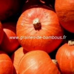 Potimarron hokkaido orange
