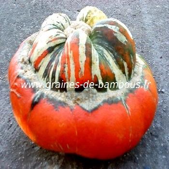 potiron-giraumon-turban-turc-www-graines-de-bambous-fr.jpg