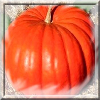 potiron-rouge-vif-d-etampes-www-graines-de-bambous-fr-www-grainesdebambous-com.jpg