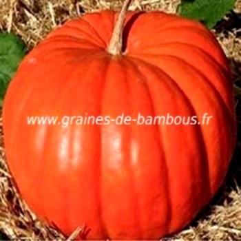 potiron-rouge-vif-d-etampes-www-graines-de-bambous-fr.jpg