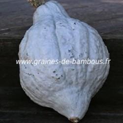 Potiron blue hubbard graines