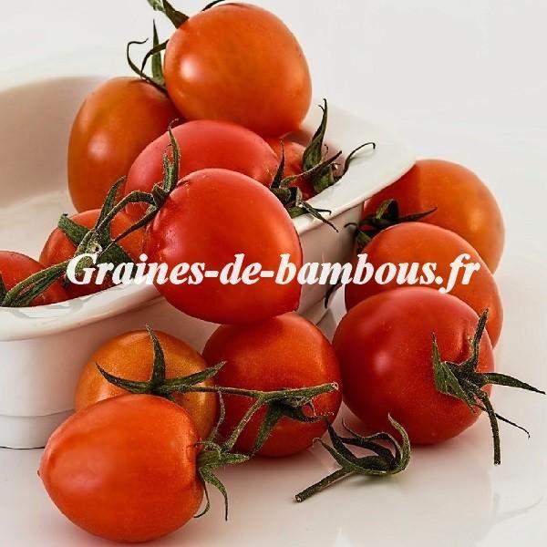 Tomate Principe Borghese 1000 graines