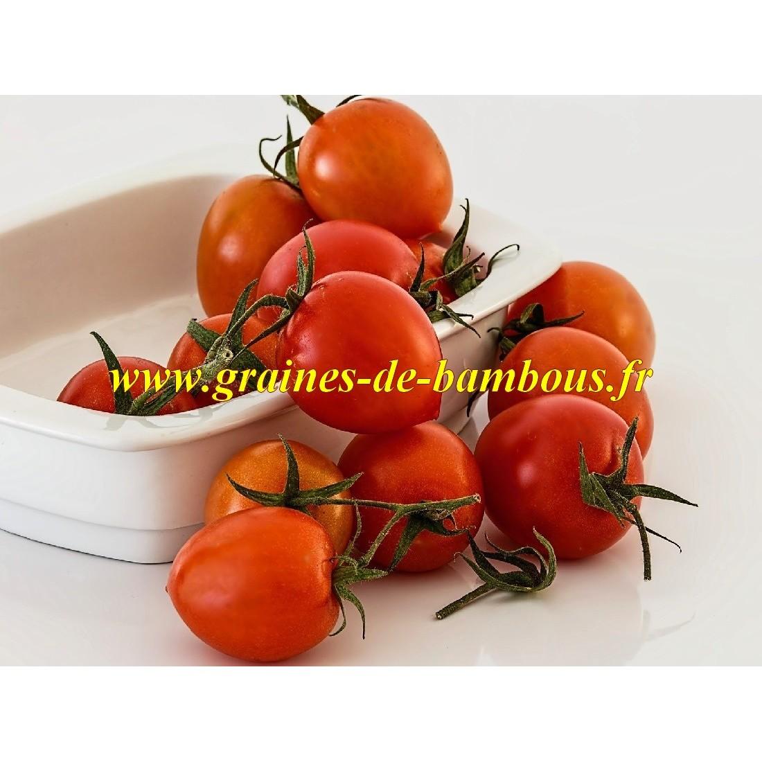 Principe borghese graines tomate