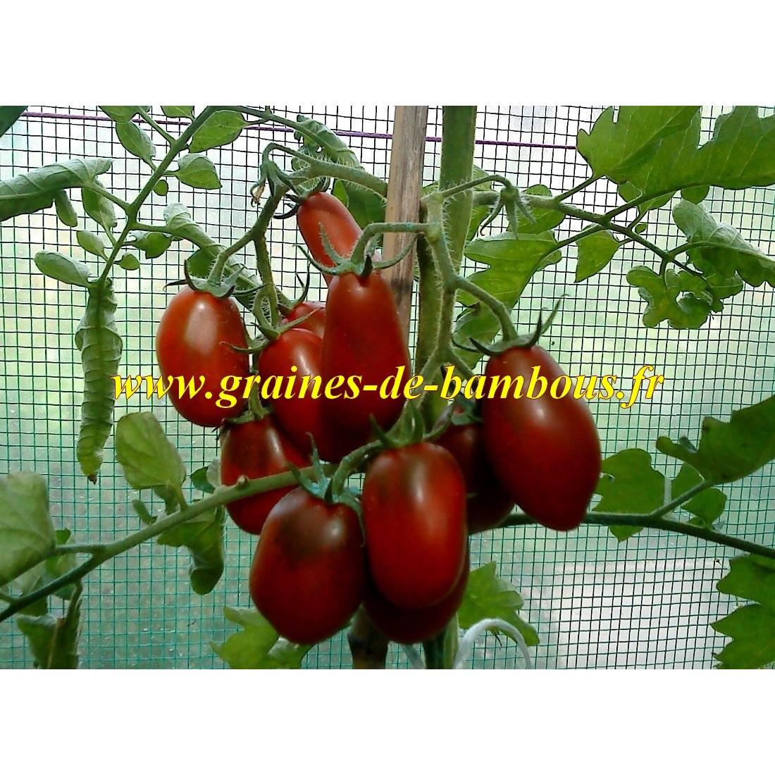 Prune noire graines de tomate