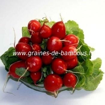 Radis cherry belle graines de bambous fr