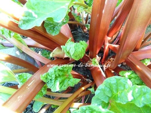Rhubarb 54084 1280