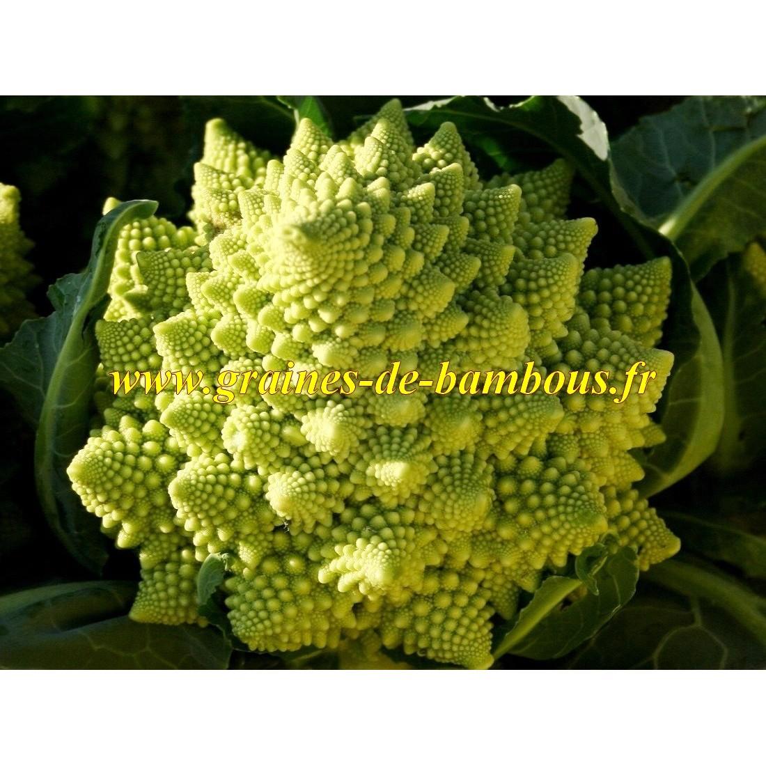 Romanesco chou fleur vert graines