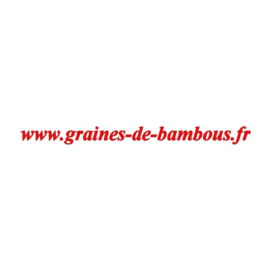 Scarole grosse bouclee graines de bambous fr
