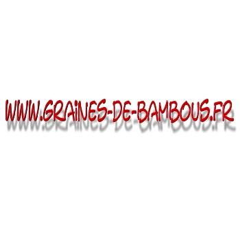 schisandra-chinensis-baie-aux-5-saveurs-www-graines-de-bambous-fr-l.jpg