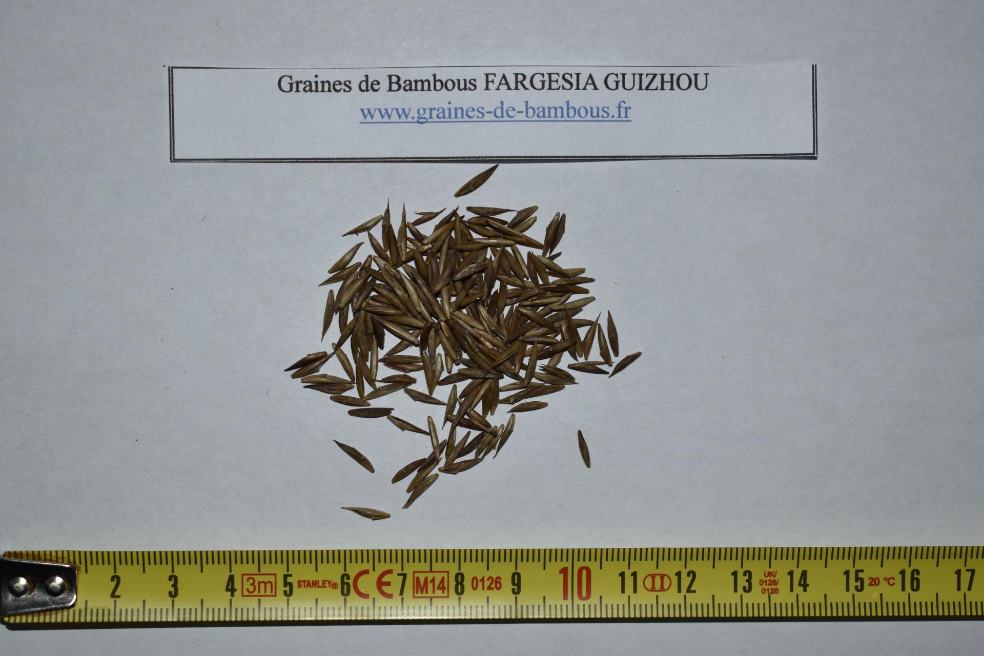 Seeds fargesia guizhou graines de bambous fr