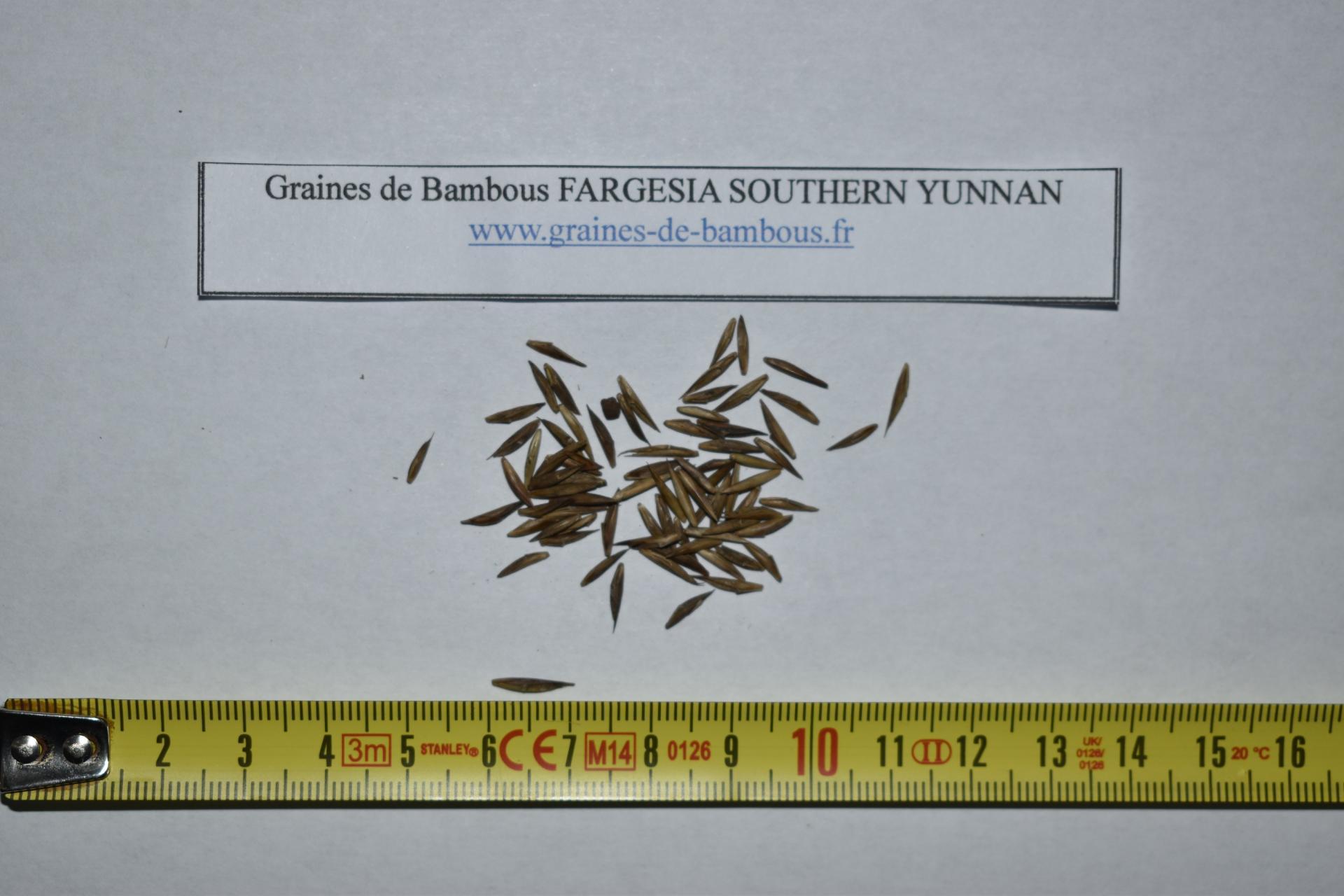 Seeds fargesia southern yunnan graines de bambous fr