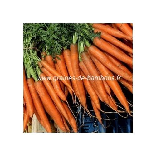 Semences carotte variete amsterdam