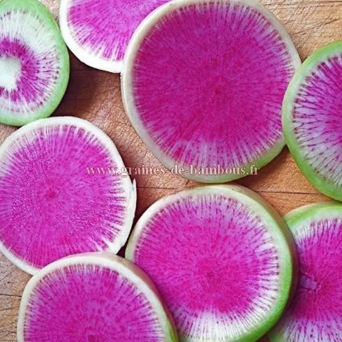 Semences de radis watermelon