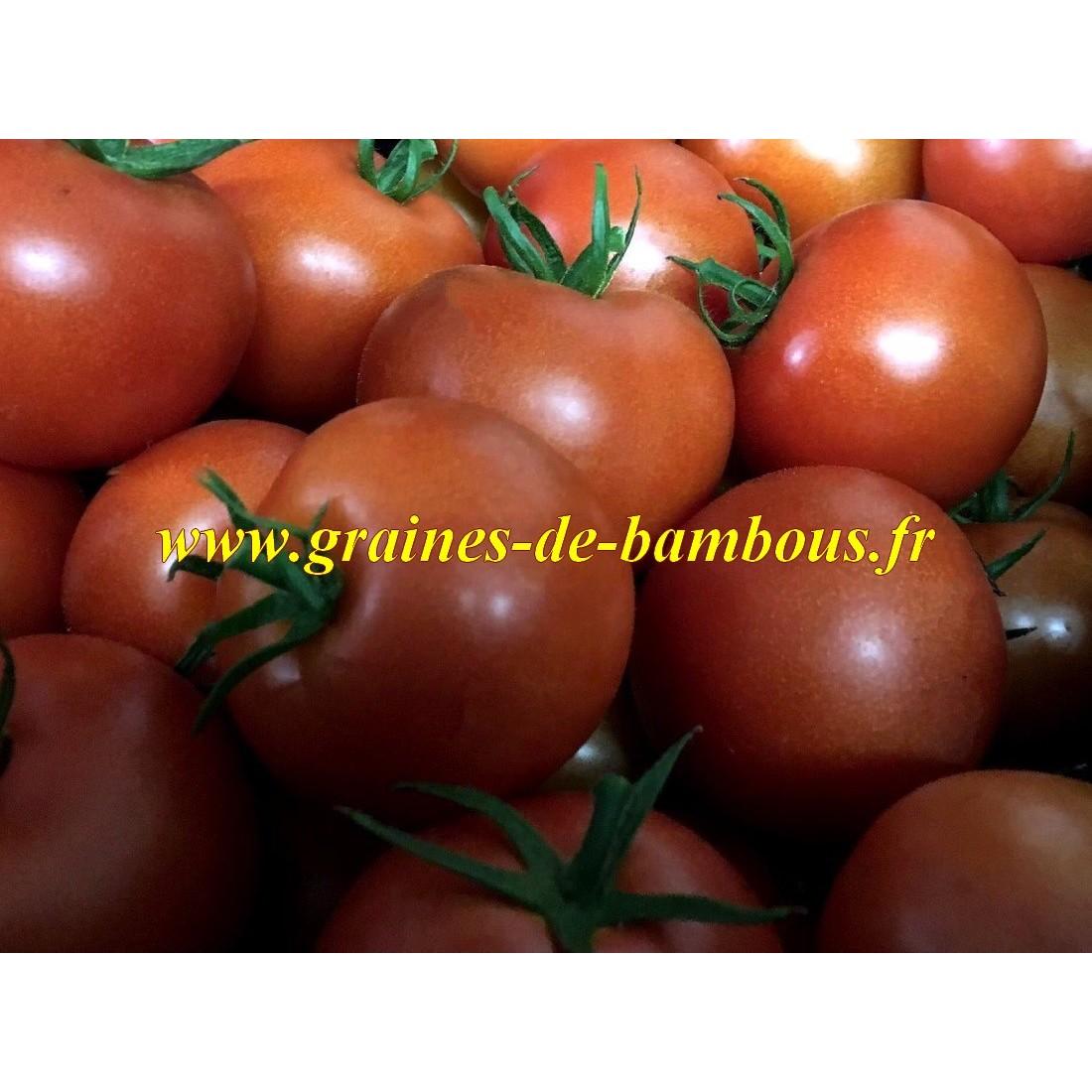 Semences de tomate black prince ou prince noir