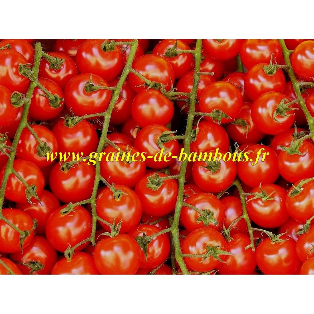 Semences de tomate gardener s delight delice du jardinier