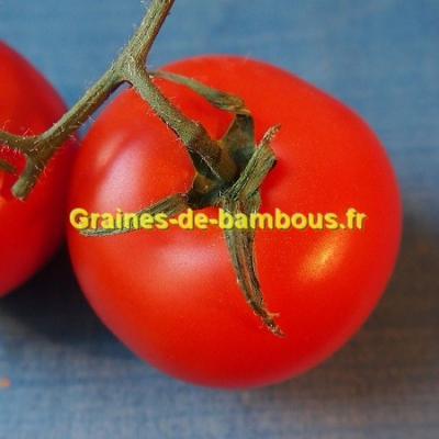 Tomate Krakus 1000 graines