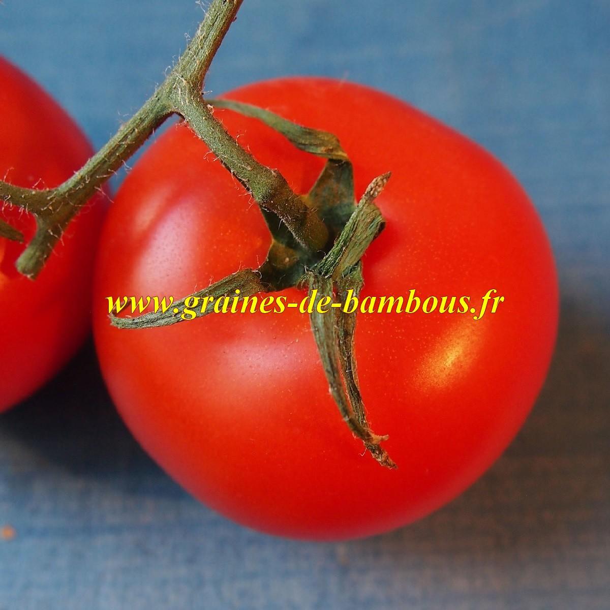 Semences de tomate krakus