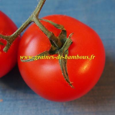 Tomate Krakus réf.466