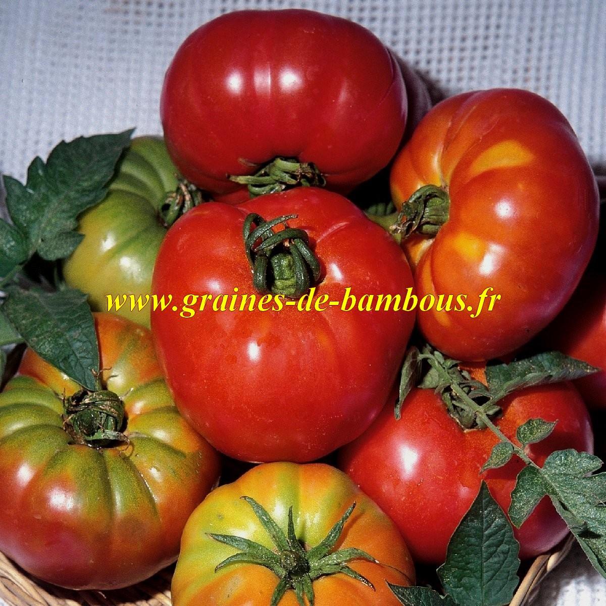 Semences de tomate pantano