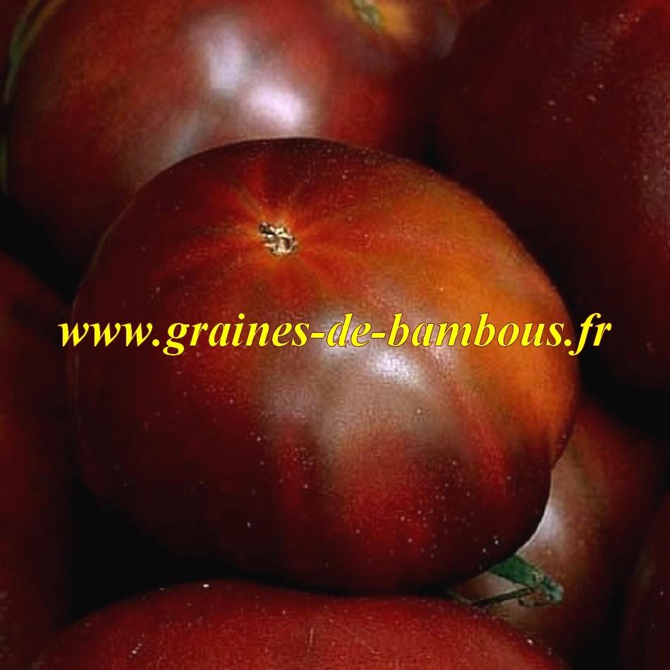 Semences tomate black russian noire russe