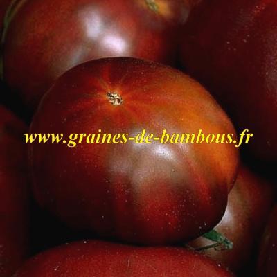 Tomate noire Russe réf.538