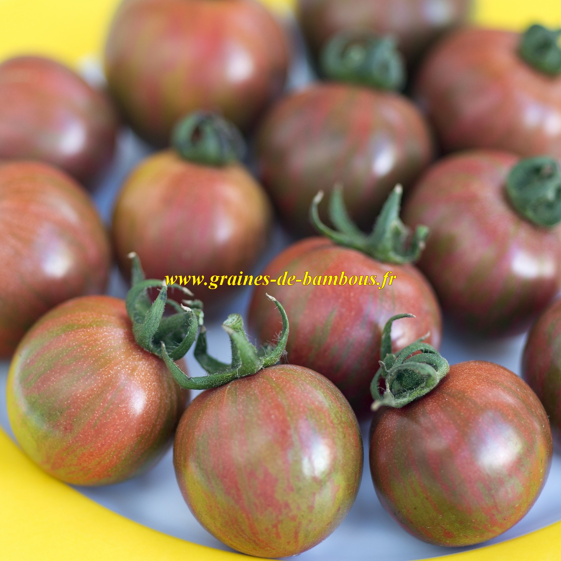 Semences tomate cerise purple