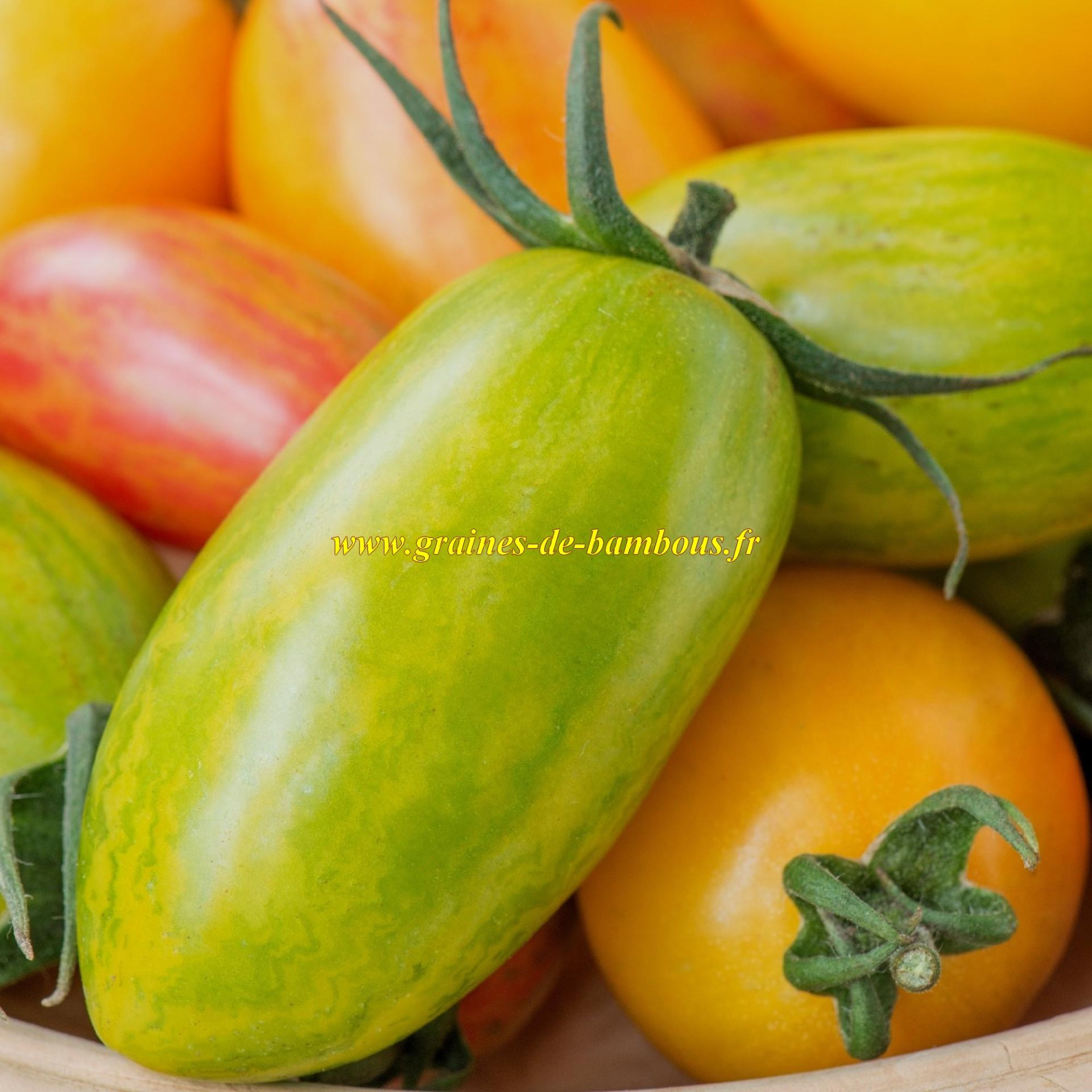 Semences tomate green tiger