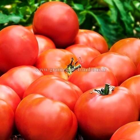 Semences tomate heinz