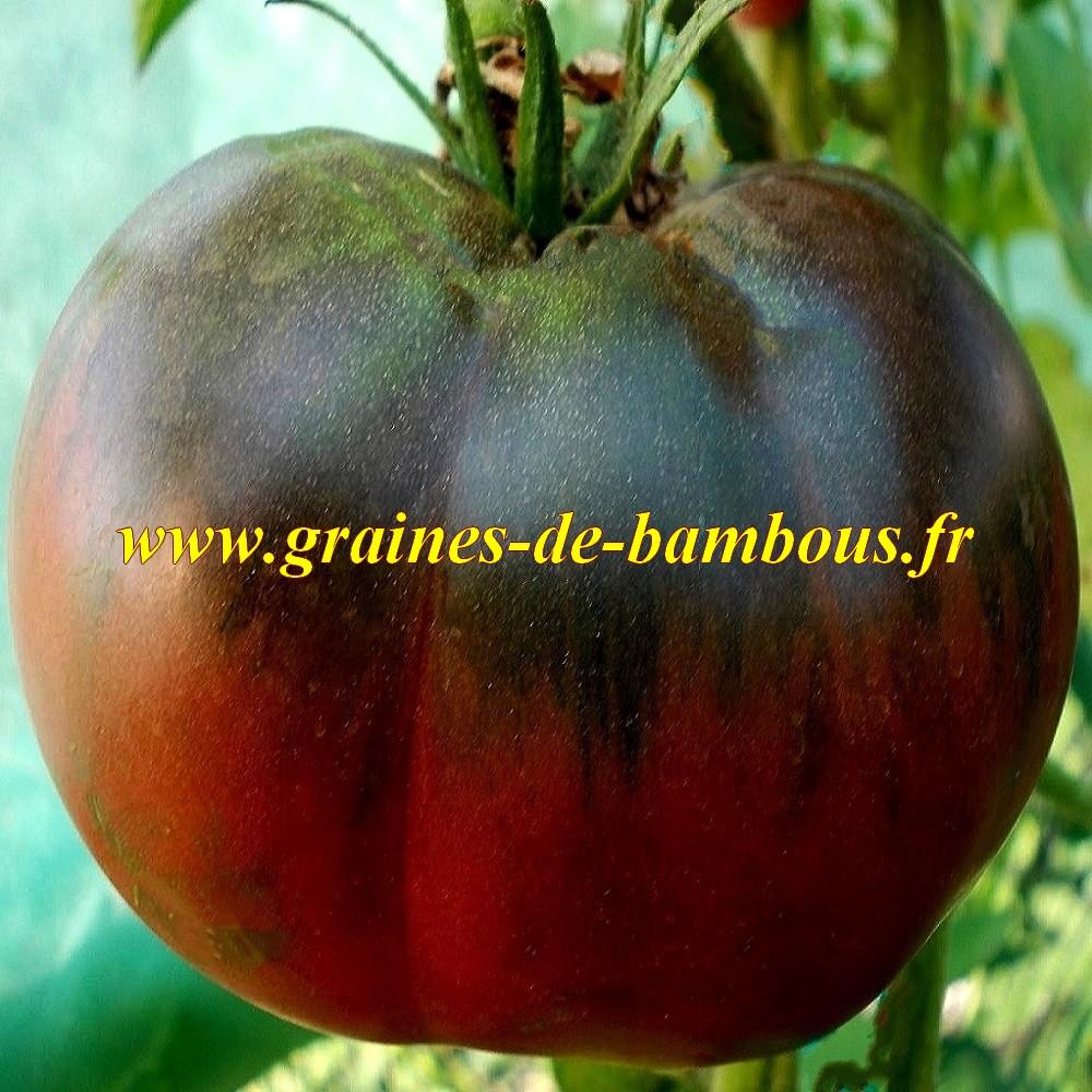 Semences tomate noire de tula