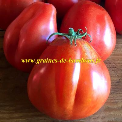 Tomate red Pear (à gros fruits) réf.465
