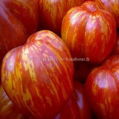 Tomate Striped stuffer réf.690