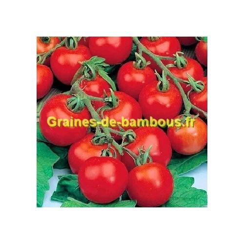 Tamina graines de tomate