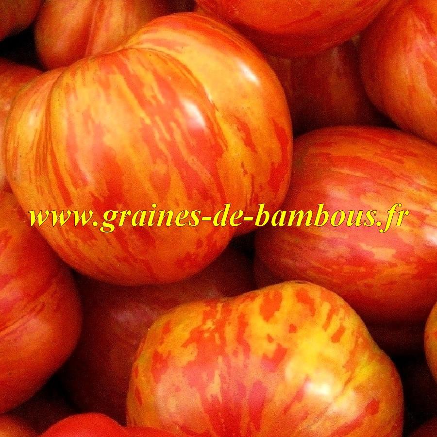 Tigerella ou tigrella graines de tomate