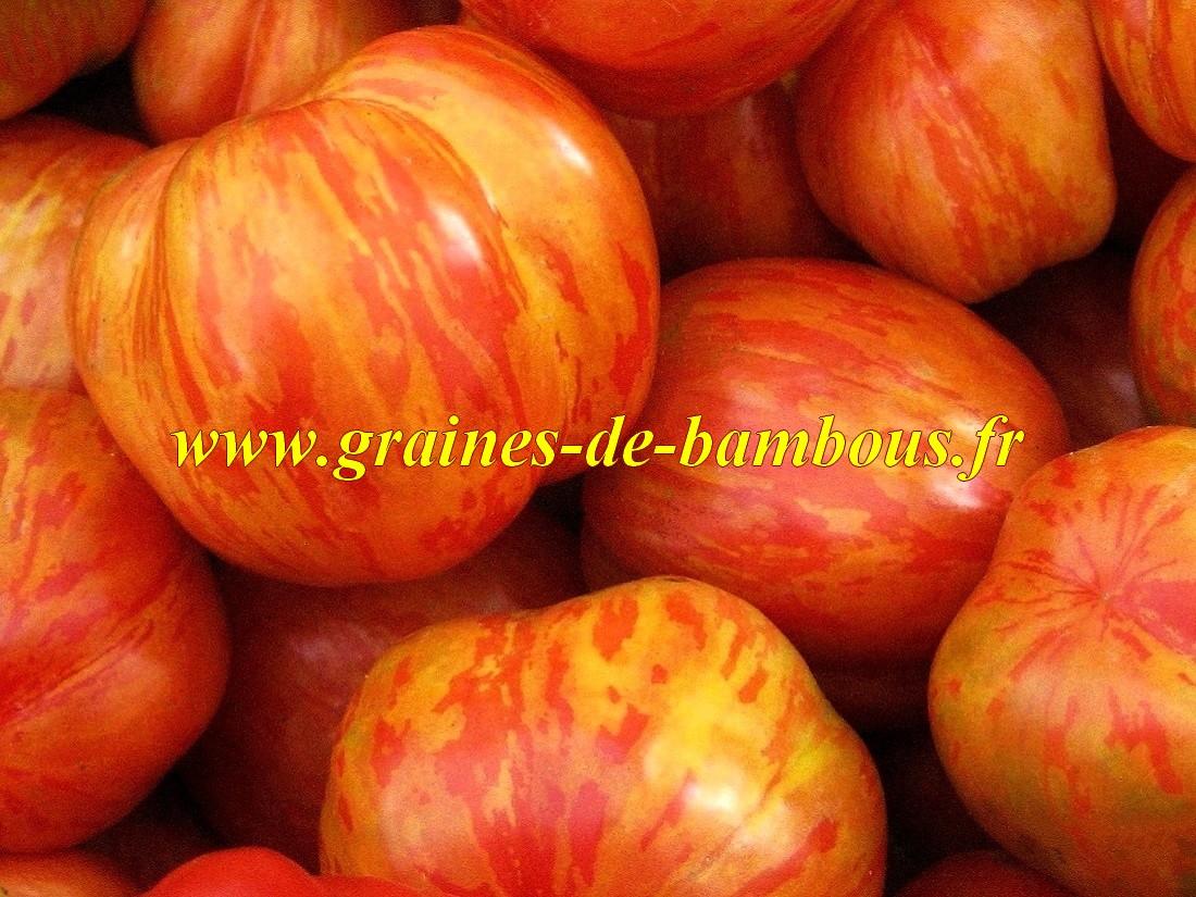 Tigerella ou tigrella tomate bicolore