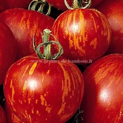 Tomate Tigerella réf.108